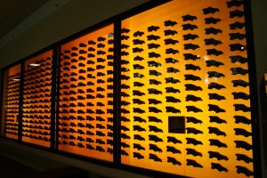 Skulls Of Dire Wolves On Display At Page Museum