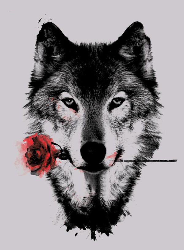 Wolf And Red Rose