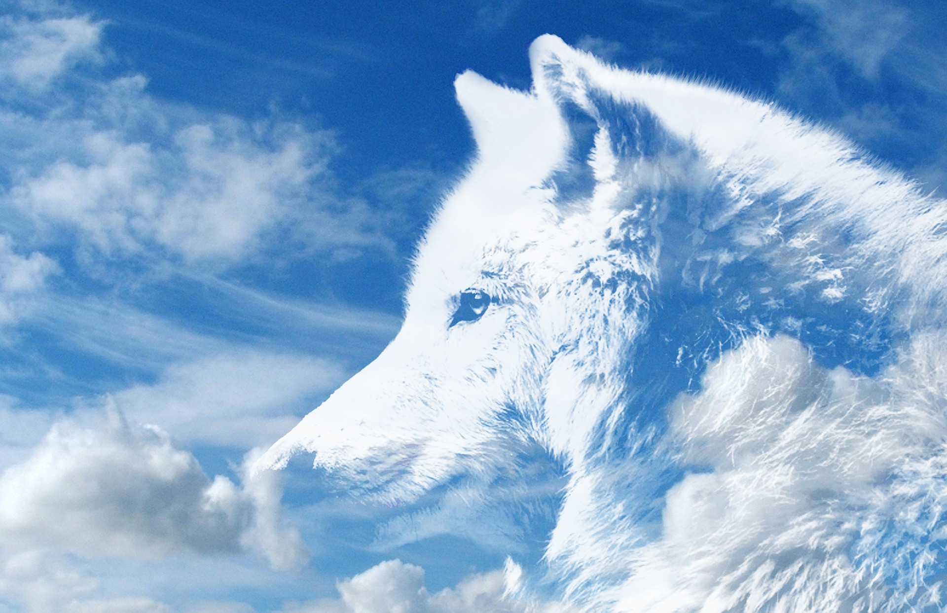 7 reasons we are so in love with wolves