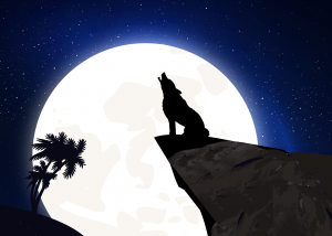 Do wolves howl at the moon ?